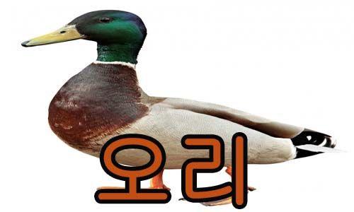 pato en coreano