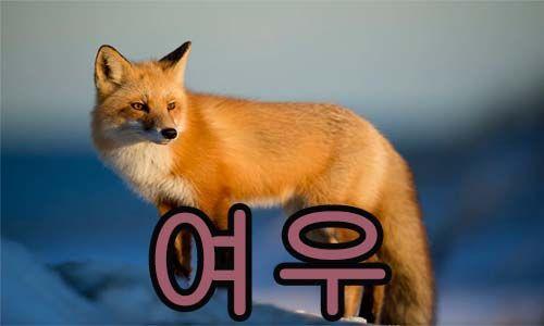 zorro en Coreano
