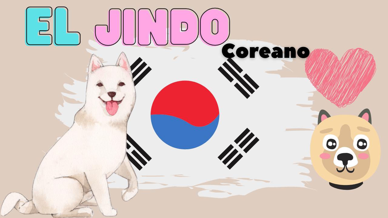 El Jindo Coreano